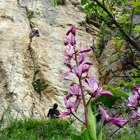 stage escalade progression hautes alpes